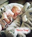 large-elephant